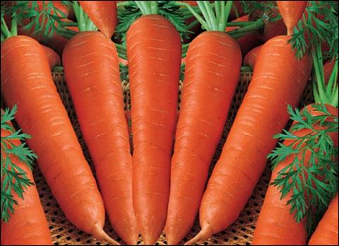 cà rốt giúp cải thiện liệt dương